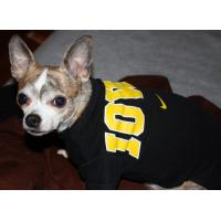 Best Popular & personalized pet clothes - pc9035 wholesale