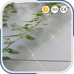 Best High Grade Flexible AISI316 2.0MM Wire Rope Ferruled Mesh Green Facade Plant Climbing Net wholesale