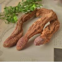 Best China xinjiang Wild dried caulis songaria cynomorium herb Suo Yang whole plant traditional sex herb for men wholesale