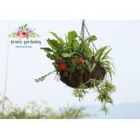 Best Classic Hanging Basket Flowers Gardening Decorate For Indoor / Outdoor wholesale