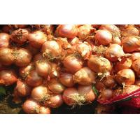 Best Small Banana Red Onion Shallot wholesale