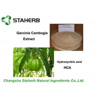 China Pure Natural Antibacterial Plant Extract Garcinia Cambogia Extract 50%, 60% ,95% HCA on sale