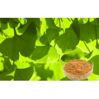 Best USP40 Ginkgo Leaf Extract , Ginkgo Biloba Powder For Food Supplement wholesale