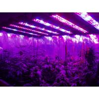 Best AC85-265v Hydroponic Plant Grow Light 95 Watt High Power Led Grow Lights wholesale