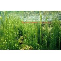 Buy cheap Healthy Organic Seaweed Powder For Food Industry CAS 977001 75 4 ISO Certificati from wholesalers