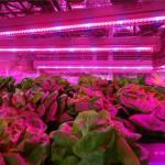 Best SMD 2835  Led Indoor Garden Lights For Flower / Vegetable , 6-8m Sensor Distance wholesale