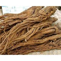 Best First Grade Traditional Chinese Medicine / Angelica Sinensis Extract wholesale