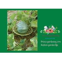 """Cheap Melon Garden Plant Supports Cradle Increase Air Circulation Underneath Fruit 5"""" in diameter x 4-3/4"""" H overall for sale"""