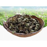 Best Clerodendranthus spicatus Thunb.C. Y. Wu.Leaves & stem tea;Mao xu cao;reat for kidney disease; lower uric acid,tcm,herb wholesale