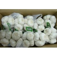 Buy cheap Chinese Fresh garlic from wholesalers