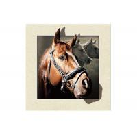 Cheap Stock Horse Image 5D Pictures Lenticular Photo Printing PET/PP Lenticular Printing for sale