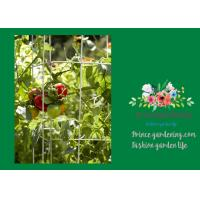 """Cheap Heavy Duty Metal Square Tomato Cages With 8"""" Square Openings for sale"""