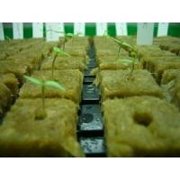 Buy cheap Water Absorption Hydroponic Rockwool Cubes , 80kg/m3 Rock Wool Base from wholesalers