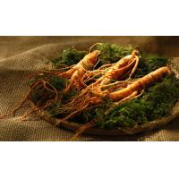 Best Ginseng extract  total saponins of panax ginseng  TSPG wholesale