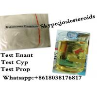 Normal Testosterone Enanthate Injection Testosterone Raw Powder For Women CAS 315-37-7