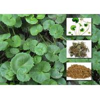 Best Gotu Kola Extract Powder Cosmetic Raw Materials Asiaticoside For Enhancing Immunity wholesale