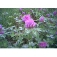 Best Red clover wholesale