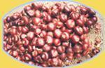 Best Red Onions wholesale