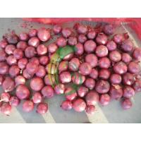 Buy cheap red onion.exporter from wholesalers