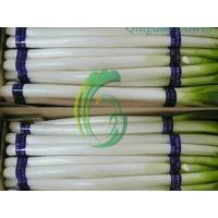 Buy cheap chinese scallion exporter from wholesalers