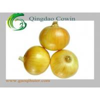 Best Yellow onions wholesale