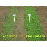 effect of poultry manure cow dung The effect of manure was similar at the two spacings but showed the superiority of poultry dropping compared to cow dung biomass yield was higher at 30×40 cm spacing while the response to manure biomass yield was higher at 30×40 cm spacing while the response to manure.