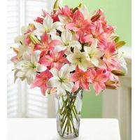 Best Pink And White Lilies wholesale