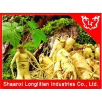 Best Immunity Enhancers Ginseng extract powder Factory Price wholesale