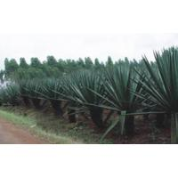 Best Sisal Products (SP) wholesale
