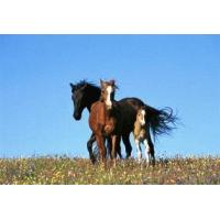 Quality Horse Stables & Field Shelters wholesale