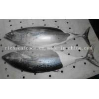 Frozen Fish Bonito Tuna
