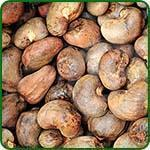 Quality Raw Cashew Nuts wholesale