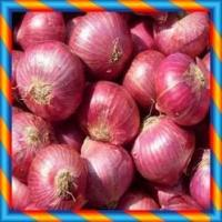 Best FRESH RED ONION wholesale