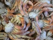 Quality Snow Crab Clusters wholesale