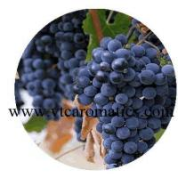 Best Grapeseed Essential Oil wholesale