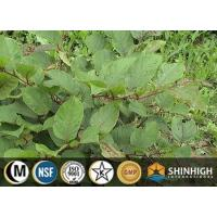 Best Plant extract| Polygonum cusidatum extract |resveratrol |501-36-0 wholesale