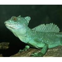 Best T8 straight reptile lamps wholesale