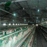 A type Egg Layer Cage