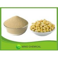 China Soybean powder/Hot selling Soybean Extract on sale