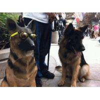 China Whole House Audio Dog Speaker German Shepherd Life Size on sale