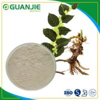 Best Water-soluble Resveratrol/ Polygonum Cuspidatum Extract Hot Sale With Top Quality wholesale
