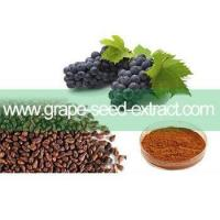 Best Water soluble grape seed extract 95% OPC wholesale