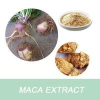 Best Best selling Maca Extract Powder/Maca root extract wholesale