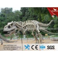 China DS-TR06 dinosaur fossil Life Size Dinosaur Fossil and Skeleton Model on sale