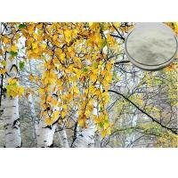 Best White Birch Extract birch leaf extract, birch leaf p.e, birch leaf powder wholesale