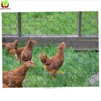 Best Poultry Chicken Netting wholesale