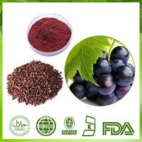 Best Grape Seed Extract Powder wholesale