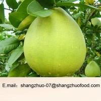 Best Fresh Green Skin Pomelo wholesale